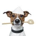 De hond van de chef-kok met het koken van lepel Stock Afbeeldingen