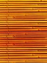 De installatiebamboe van stelen Stock Foto