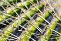 De macro van de cactus Royalty-vrije Stock Afbeeldingen