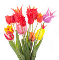 De mengeling van tulpen Royalty-vrije Stock Afbeelding