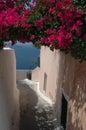 De scène Griekse eilanden van de straat Stock Fotografie