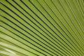 De textuur van de palm Royalty-vrije Stock Foto