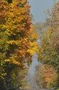 De weg door de bos gouden herfst bomen met de herfstbladeren Stock Afbeelding