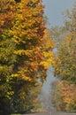 De weg door de bos gouden herfst bomen met de herfstbladeren zonnige dag Royalty-vrije Stock Foto's