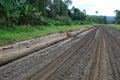 De weg van het transport in binnenland van Papoea-Nieuw-Guinea Stock Foto's