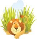 De zitting van de leeuw op het gras Stock Foto's