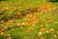 Dead Autumn Fall Leaves Season Laying Ground Grass Orange Brown Royalty Free Stock Photo