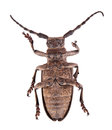 Dead beetle Stock Photography