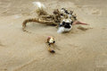 Dead body of a bird on the beach Royalty Free Stock Photo