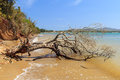 Dead broken tree in sea after storm, hurricane