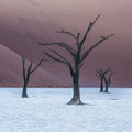 Dead Camelthorn Trees and red dunes,Deadvlei, Sossusvlei, Namibia Royalty Free Stock Photo