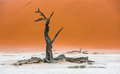 Dead Camelthorn Trees and red dunes, Deadvlei, Sossusvlei, Namibia