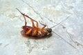 Dead Cockroach on floor Stock Photo