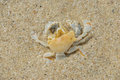 Dead crab on the beach Stock Photography