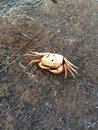 Dead crab on the ground only body was dry Royalty Free Stock Images