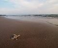 Dead crab white shell of a on a fine brown sand beach in thailand with green seascape panorama view and blue sky with clouds in Stock Photography