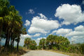 Dead end road in everglades florida looking down at the of a surrounded by palm trees with a deep blue sky and white clouds the Royalty Free Stock Photos