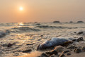 Dead fish against sunset at the coast of Koh Chang island, Thai Royalty Free Stock Photo