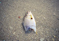 Dead fish on the beach water pollution concept close up Royalty Free Stock Photos