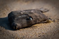 Dead Fish on Sand Royalty Free Stock Photo