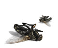 Dead flies on white background Royalty Free Stock Photo