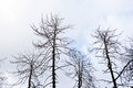 Dead forest environmental damage after fire Stock Images