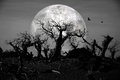 Dead forest at spooky midnight under moonlight Royalty Free Stock Photos