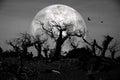 Muerto bosque