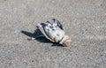 Dead Gray Sparrow On The Floor