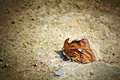 Dead leaf on a ground Royalty Free Stock Images