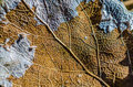 Dead leaf old color brown veins structure spring autumn Royalty Free Stock Photos
