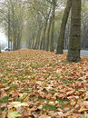 Dead leaves on a big avenue Royalty Free Stock Images