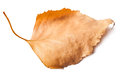 Dead leaves closeup Royalty Free Stock Photo