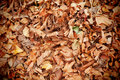 Dead leaves picture of in autumn Royalty Free Stock Photos
