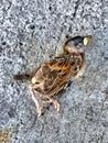 Dead Little Bird