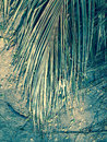 Dead palm leaf the fronds of a tree lying on dusty ground Royalty Free Stock Image