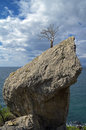 Dead pine on the cliff above the sea relict rock crimea black coast Royalty Free Stock Photos