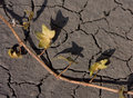 Dead plant on barren land Stock Photo