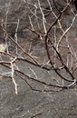 Dead plant with hill stone texture background. Royalty Free Stock Photo