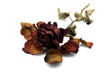 Dead Rose Royalty Free Stock Photo