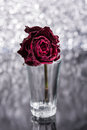 Dead rose unloved broken heart Royalty Free Stock Photography