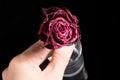 Dead rose unloved broken heart Stock Images