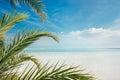 Dead Sea coastline Royalty Free Stock Photo