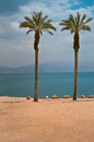 Dead sea oasis on the shore of the israel Royalty Free Stock Photography