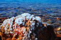 Dead sea salt crystals crystallized at the jordan the also called the is a lake bordering jordan to the east and Stock Photography