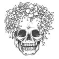 Dead skull with rose flowers sketch Royalty Free Stock Photo
