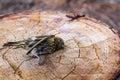 Dead Sparrow Bird