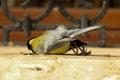 Dead Sparrow
