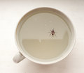 The dead Spider. Royalty Free Stock Photo