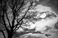 Dead tree against moon and clouds silhouette of in a cloudy night processed with black white style can be used for background Royalty Free Stock Photography